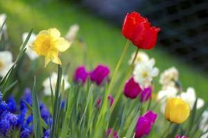 Un jardín colorido de primavera