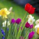 Los días de la primavera que nunca son primavera